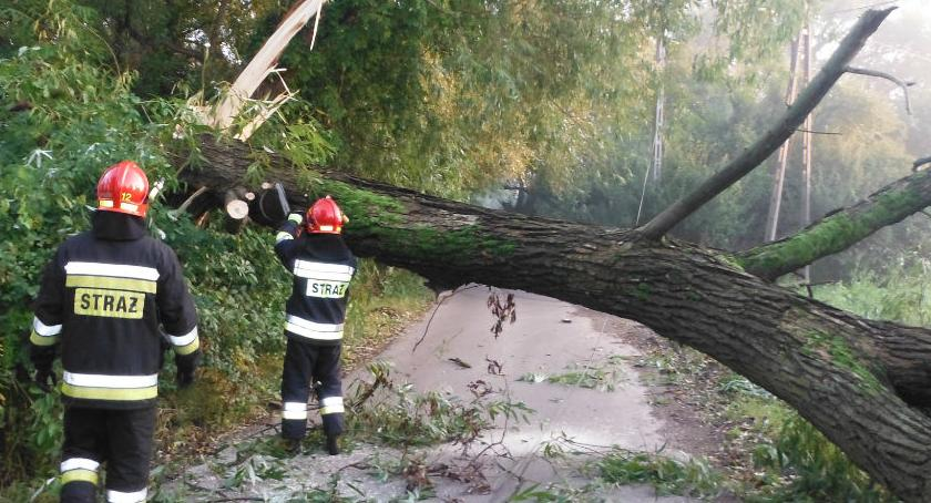 Bezpieczeństwo, Wielkie drzewo zablokowało Panoramy Zdjęcia akcji strażaków - zdjęcie, fotografia