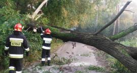 Wielkie drzewo zablokowało ul. Panoramy. Zdjęcia z akcji strażaków