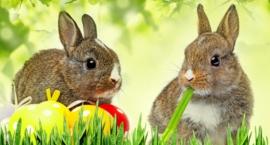 Spokojna i rodzinna Wielkanoc poza domem? Mamy pomysł!